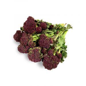 Sprouting Purple Broccoli